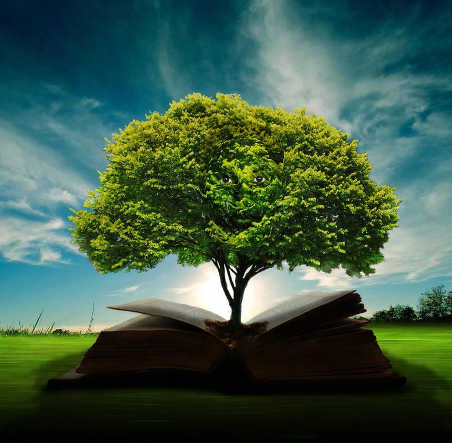 Wisdom Tree by Doug222