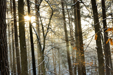 Sun light in winter forest 1 by EdieTH