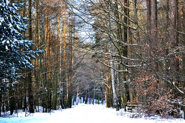winter by EdieTH