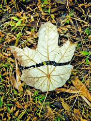 Collab: Stitching an Autumn by quarterbacker