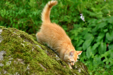 Cat by Mincitis
