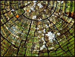 Wooden Texture by k-ee-ran