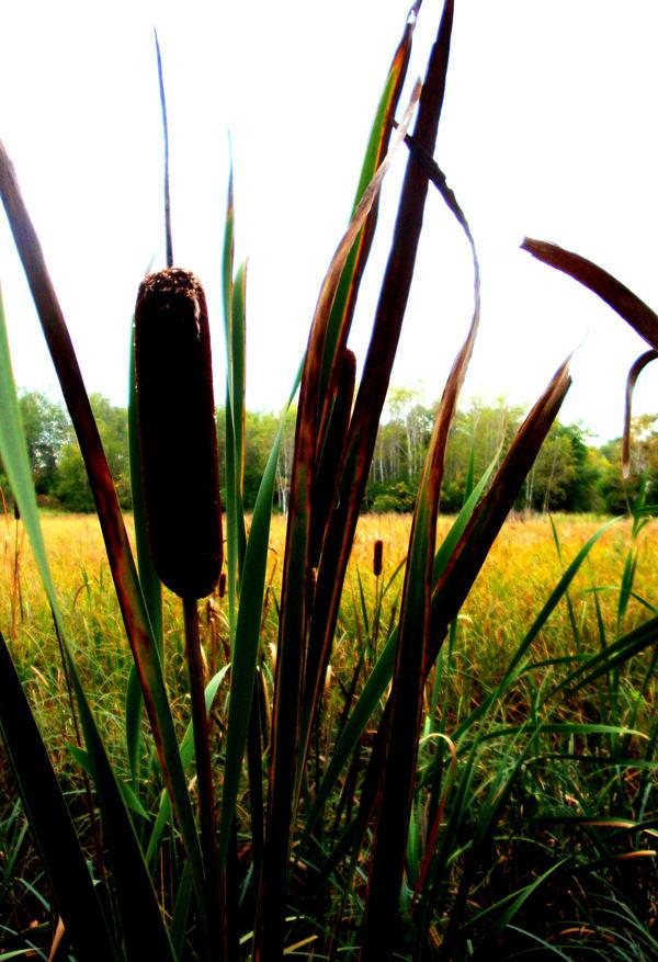 :nature's: MN Pride by k-ee-ran