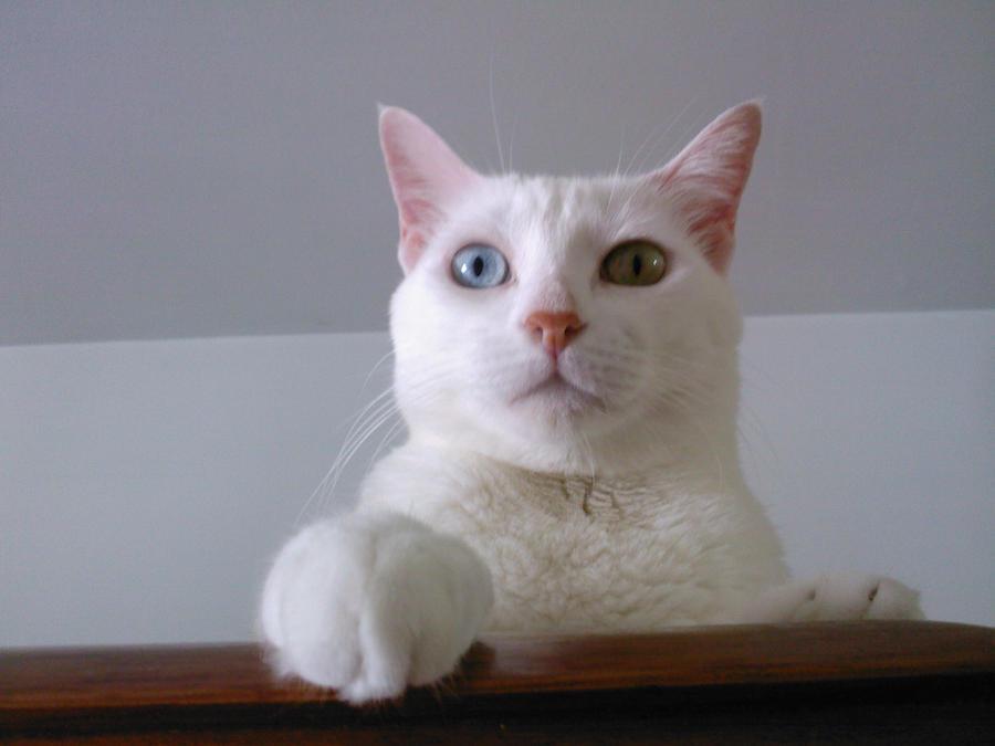 April Fools Cat by Bloodbanebr