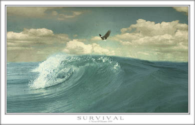 Survival by Nexus-Of-Dreams
