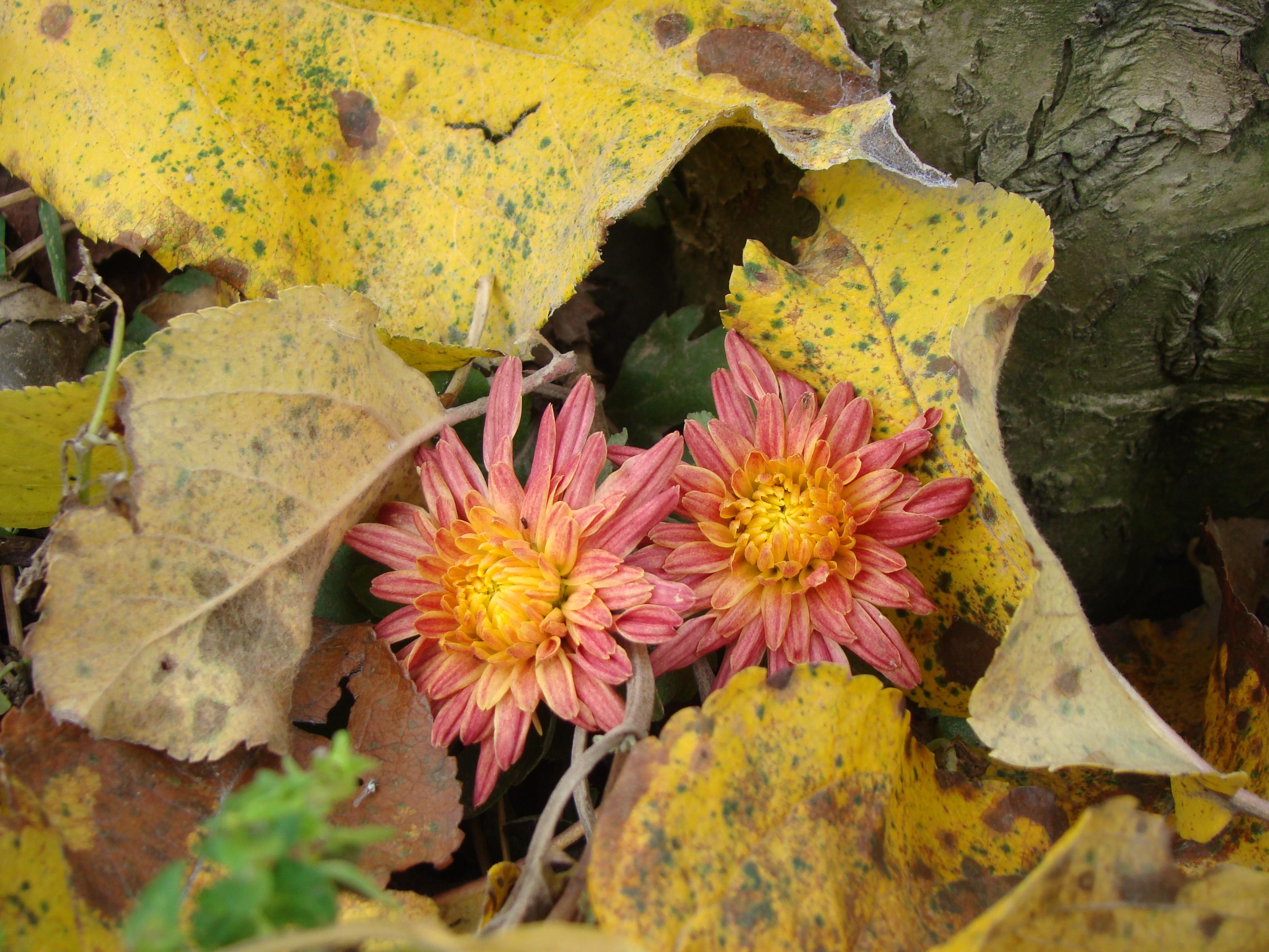Autumn flowers by blueionis on deviantART