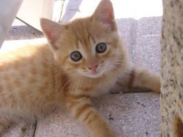 orange cat by Bain29
