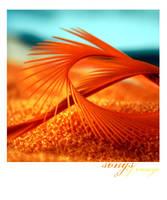 songs of orange by lylianthe