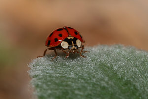 Sexy Lady....bug by Insect-Lovers-Club