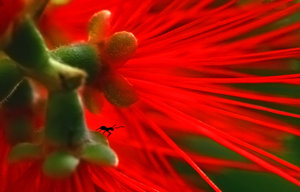 Red ant2 by Insect-Lovers-Club