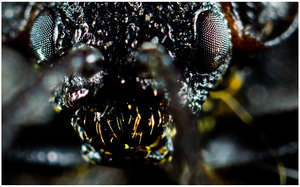 Yellow Teeth by Insect-Lovers-Club