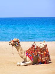 Camel by Emi83