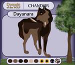 [DotW - Application] Dayanara   Chandor