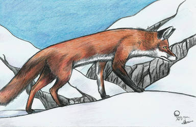 Fox by Fenrir7777