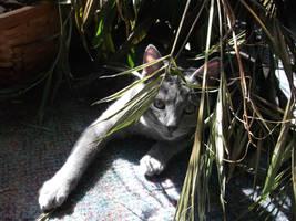 jungle cat one by rikumario