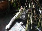 jungle cat one