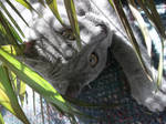 jungle cat two