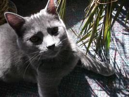jungle cat three by rikumario