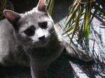 jungle cat three