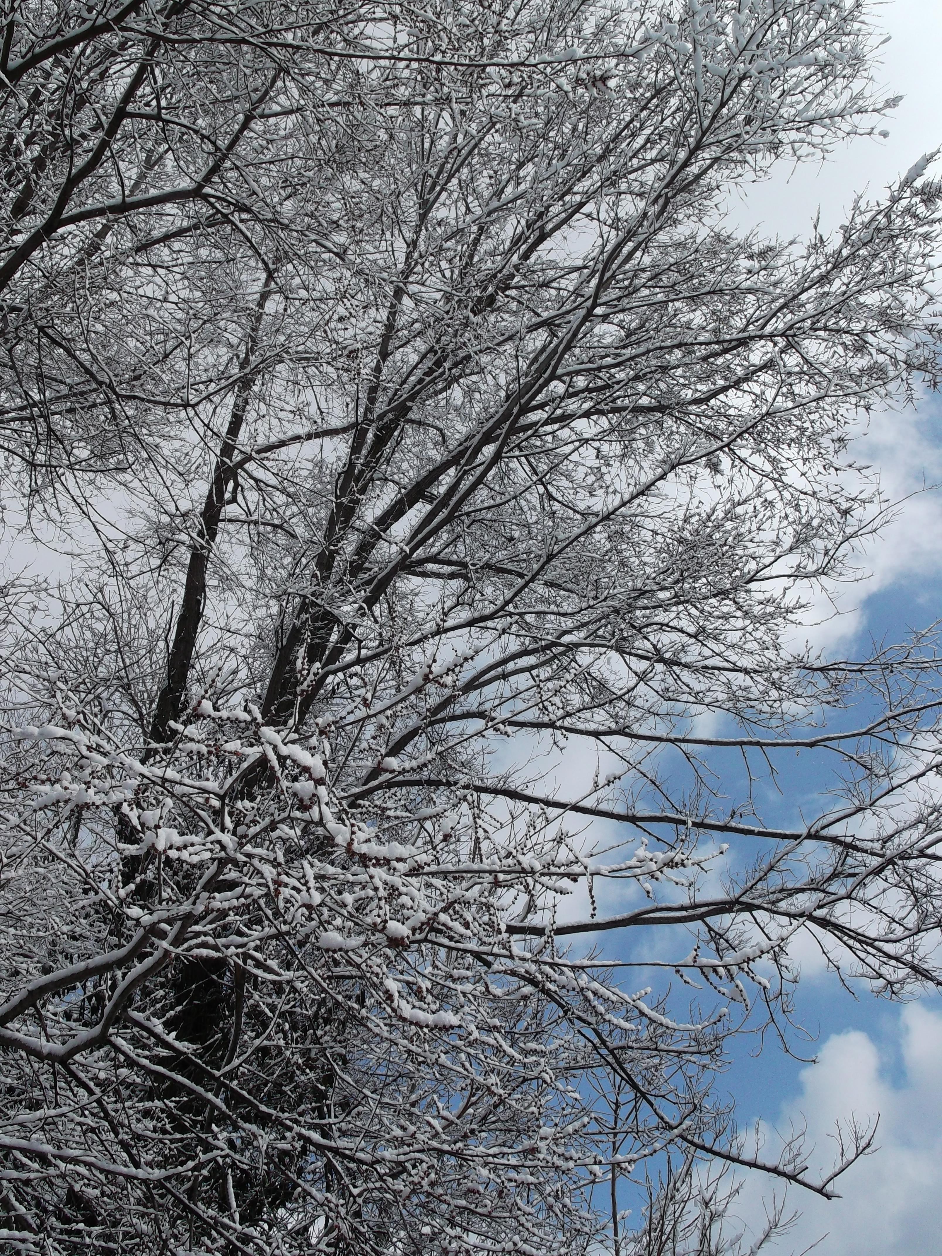 winter Wonderland 3 by rikumario