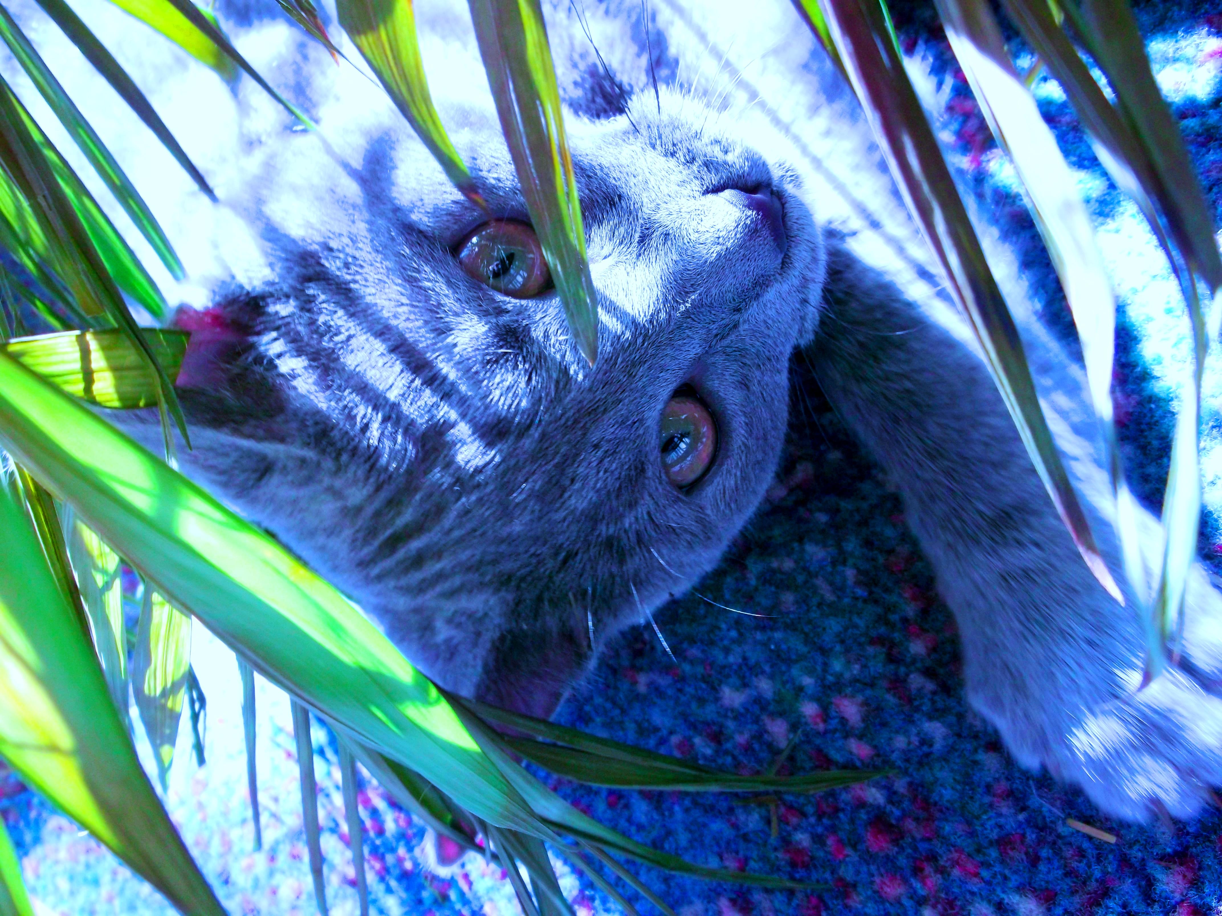 Crazy color cat by rikumario