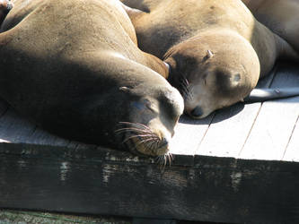 Nap Time at the Pier