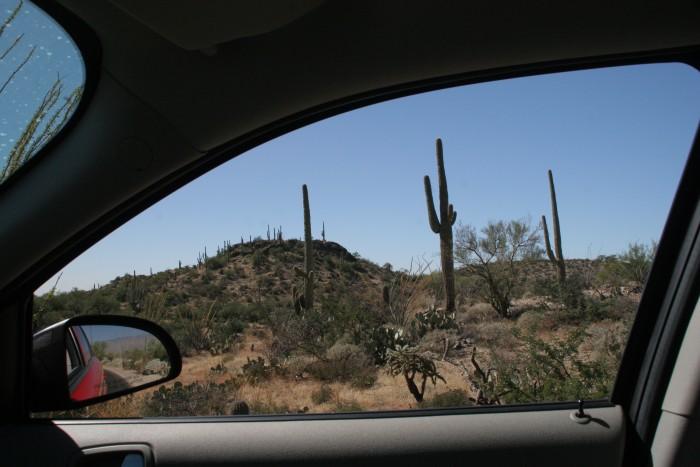 Saguaro National Park by mumblyjoe