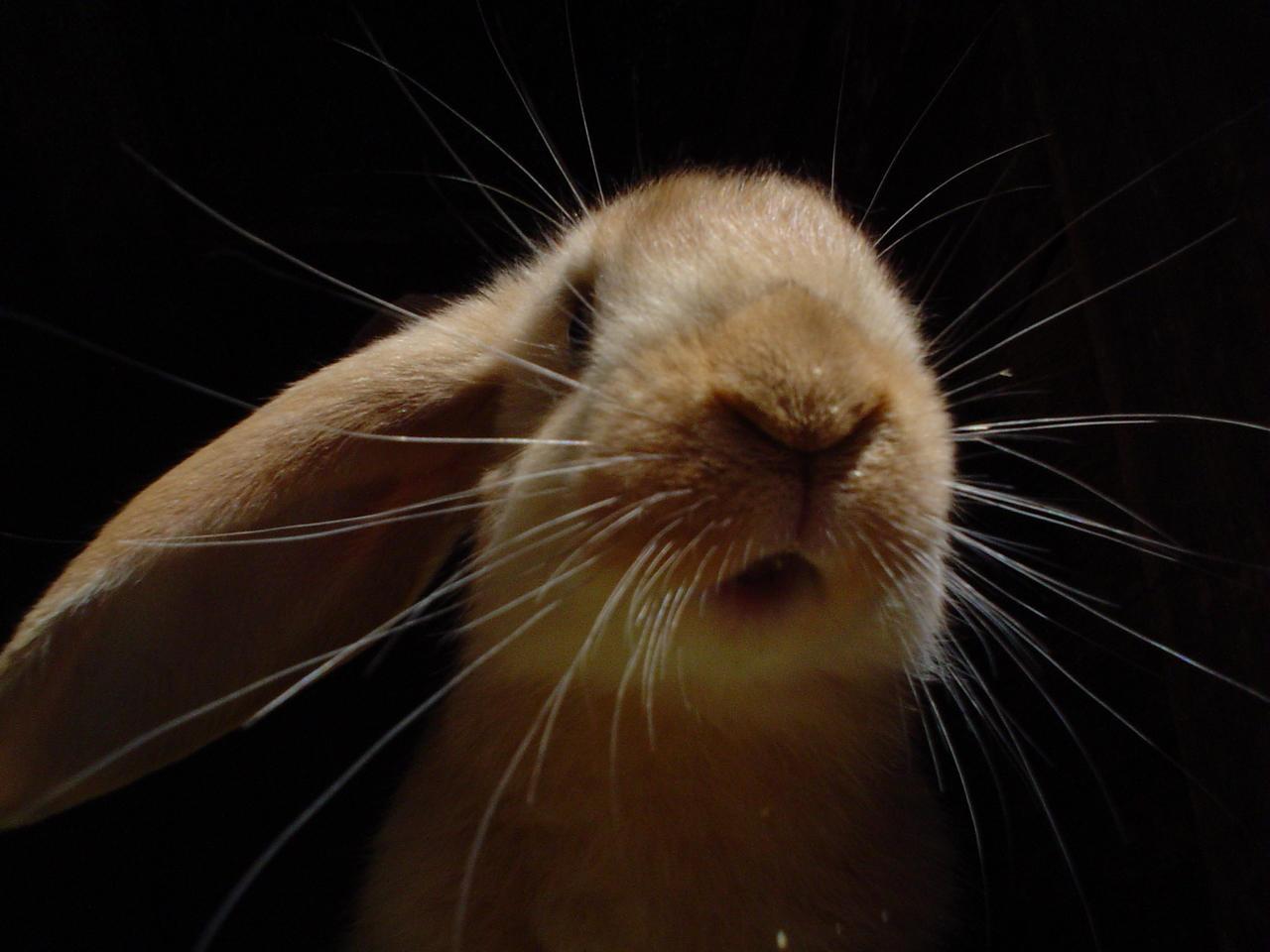Rabbit by Vajk