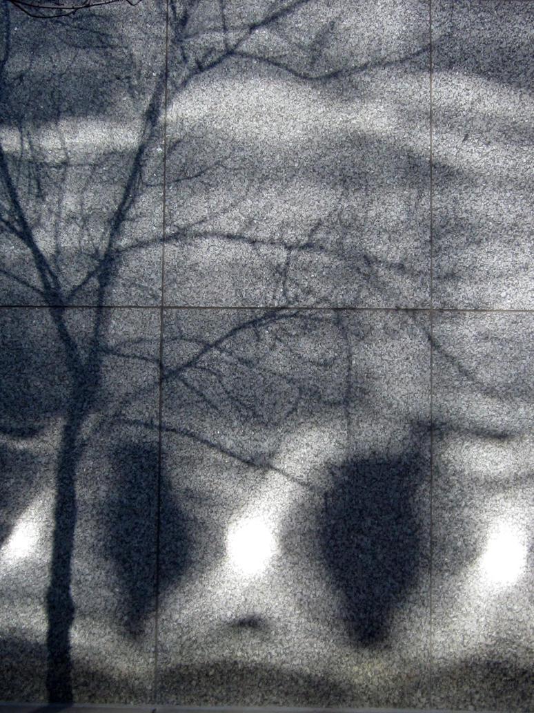 Shadows and Light..for Christina by mrmd53