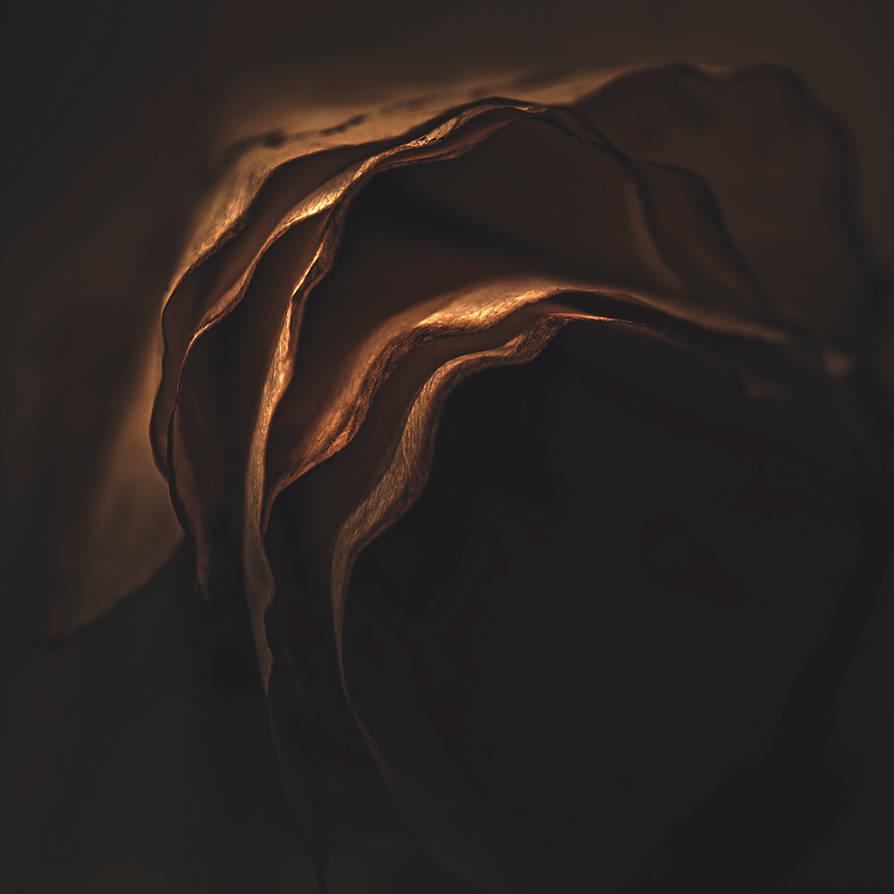 Petals by siamesesam