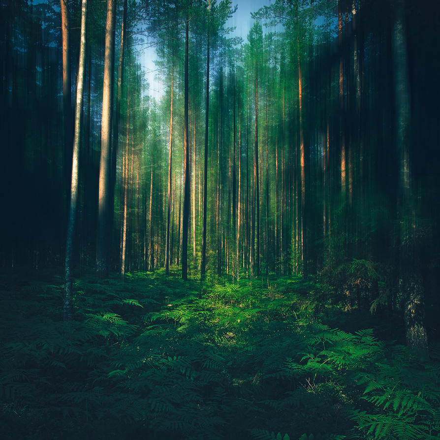 In A Forest by siamesesam