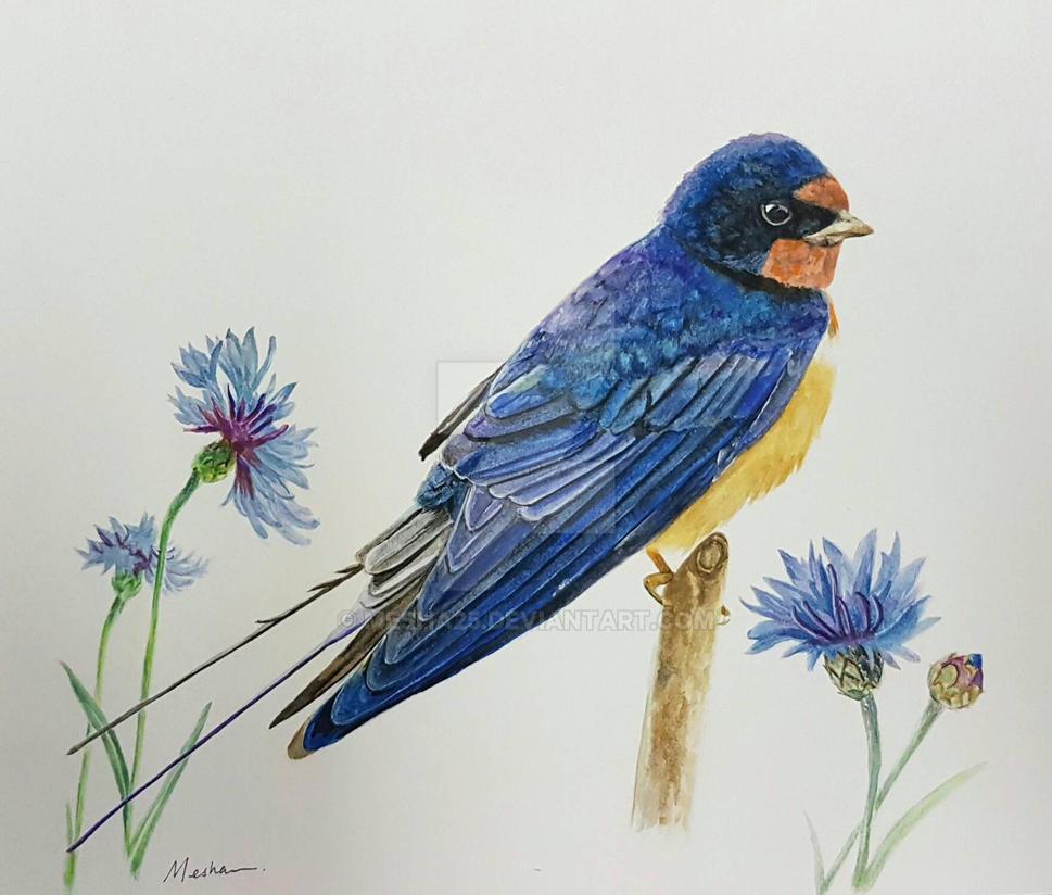 Barn Swallow  Cornflowers by Mesha25