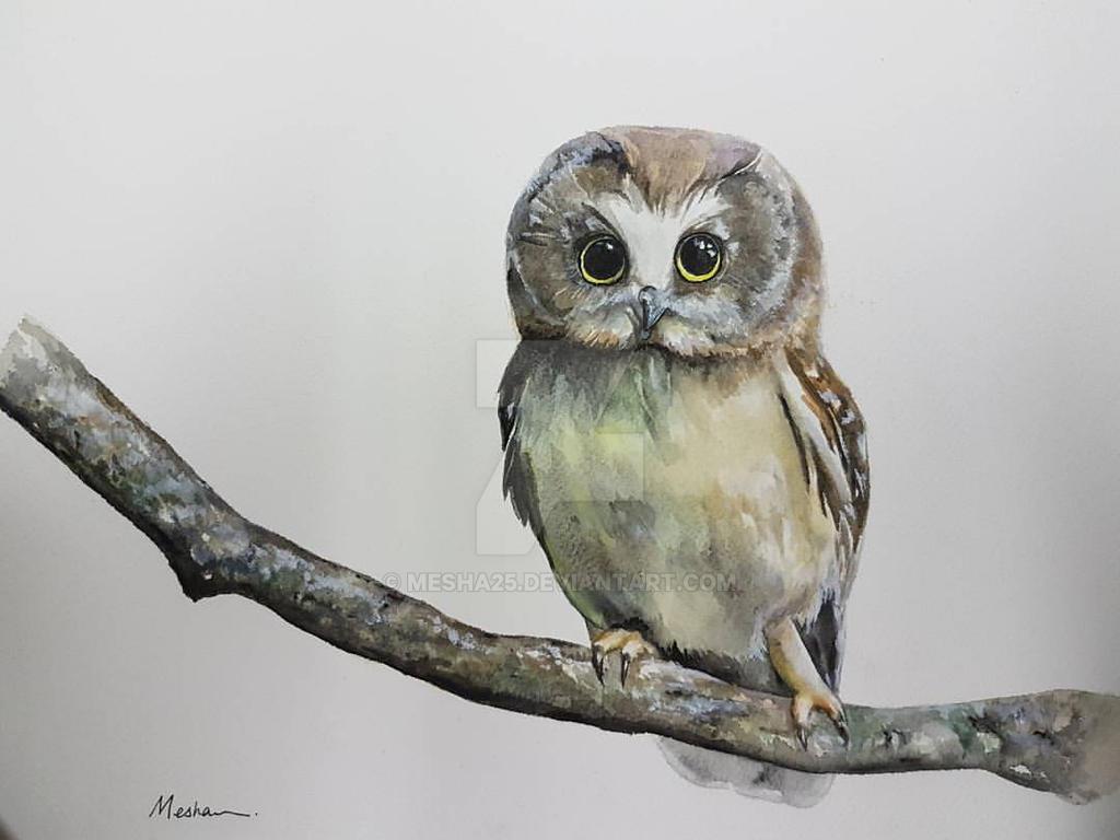 Owl by Mesha25