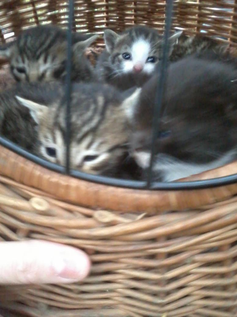 Kitten by Kyuubidragon91