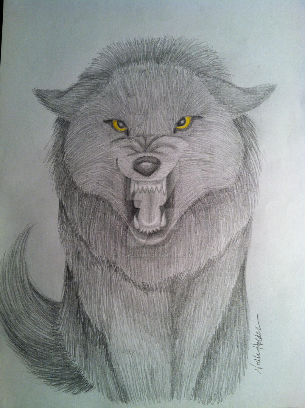 Realistic Drawings Of Wolves Growling Growling Wolf Front Vi...