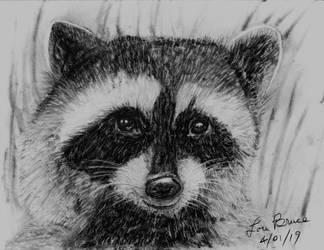 Raccoon - LuthiAir by LuthiAir