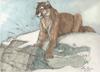 Mountain Lion -  Painting a Sketch - Luthiair by LuthiAir