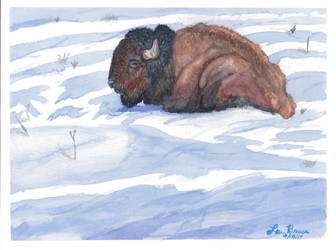 Buffalo in a Snowfield by LuthiAir