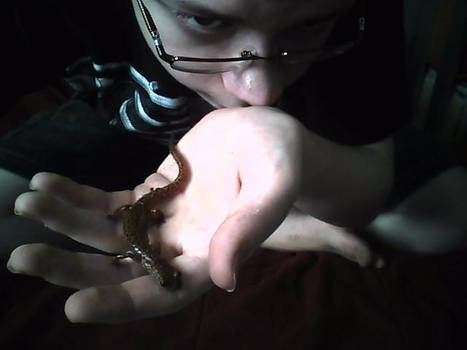 Little Salamander