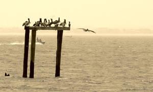 Ocean Birds by SafePit