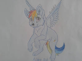 Rainbow Dash as a wolf by Elisabeta999Rezac