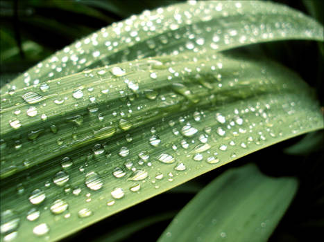 Droplets 15