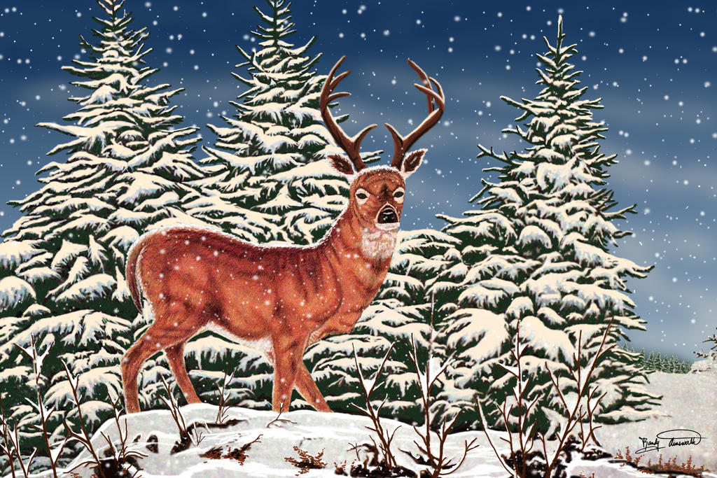 Snow Stag by RandyAinsworth