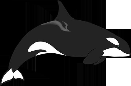 Orca by Kydnt
