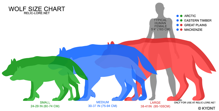 Origin and Appearance of the Wolf