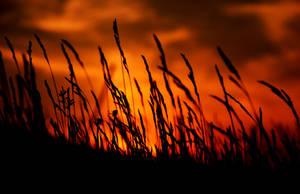 Sunset II by Flunipam