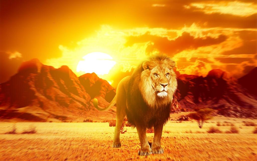 Savannah Lions (Ninth Edition) - Gatherer - Magic: The Gathering