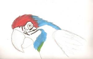Segundo avance Dibujo de papagayo.... by IloveWKever