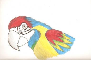 Tercer avance Dibujo de papagayo by IloveWKever