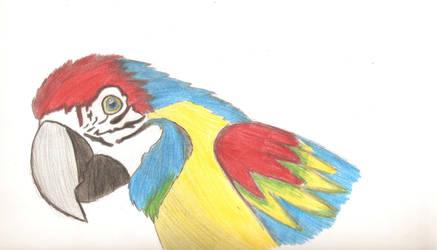 Cuarto avance Dibujo de papagayo.... by IloveWKever